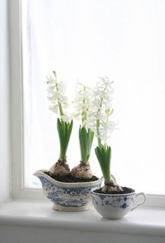Styling the Seasons - January | White Hyacinths | Indoor bulbs | Vintage blue and white china planters | Apartment Apothecary