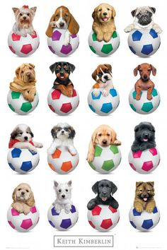 Keith Kimberlin Puppies Footballs Maxi Poster