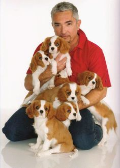 Cesar Milan with best breed ever.  Cesar Milan is the BEST too!  ........Cavalier King Charles #CavalierKingCharlesSpanielPuppy