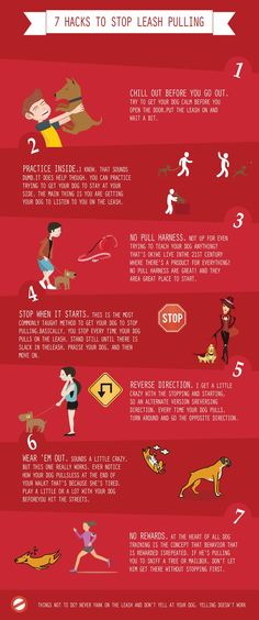Stop leash pulling by your dog with these handy tips!