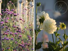 September, Plants, Lawn And Garden, Plant, Planting, Planets