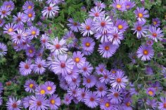 Four Fab Plants for Fall