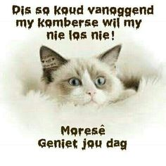 Good Morning Messages, Good Morning Quotes, Cold Weather Quotes, Goeie More, Afrikaans, Laughter, Sayings, Words, Night