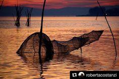 #Repost @robertacostanzi  #lagotrasimeno #lago #trasimeno #trasimenolake #trasimenoland #fotolaghiditalia #lake #lake_in #acqua #natura #umbria #umbriainfoto #umbriain #umbriagram #sunset #tramonto #picart #umbriasunset #thepicart #sunset_super_pics #umbria_bestsunset #landscapes #instalike #instanature #instagood #travelgram #travel #igerumbria