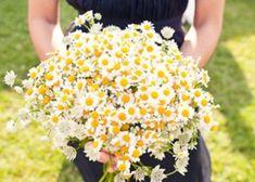 ハーブのいい香りで癒される♡清楚で可愛いカモミールの花束が素敵です♡
