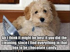 I think Caesar and most doggies would agree with this.