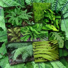 Ferns are among the most ancient plants on earth, first appearing over 400 million years ago. They reproduce by means of minute spores, which usually develop on the undersides of the fronds. Some species spread widely by means of rhizomes, underground or surface‑running stems that produce roots. Other ferns grow small plantlets, called bulbils, along their fronds, which take root in the ground when the fronds droop