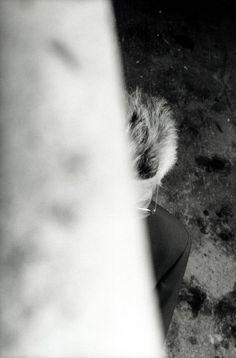 Samuel Beckett, Paris, 1989 -by Francois-Marie Banier