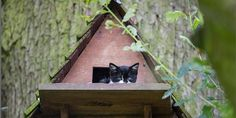 Cat gives birth to litter of adorable kittens in birdhouse 9/10/2012 It's a beautiful wood and shingle A-frame with a great view, so the expecting mother cat must have thought the carefully built birdhouse was worth the 20-foot climb. The black-and-white mom had four adorable kittens in the birdhouse, which had been built to encourage the arrival of an owl breed known as Little Owls, on a private English property.