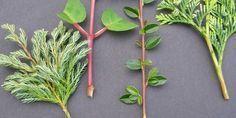 List of plants to cut in summer Permaculture, Plants, Grape Plant, Vertical Vegetable Gardens, Potager Garden, Mother Plant, Flowers Diy, Garden Accessories, Garden Plants