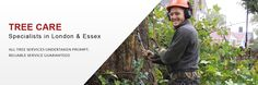 Tree surgeons London. Keith Archer Tree Care provide tree felling, tree pruning, stump grinding, hedge cutting and emergency tree services in London and Essex. Qualified arborists and tree surgeon with offices in London and Essex. NPTC tree surgeons.