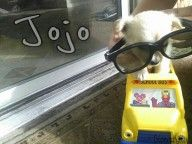 Jojo - Dog of the Week Candidate - PuppyDogSwag.com | Repin to Vote!