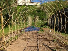 Vertical veg. Bamboo structures for vegetable growing in small spaces.