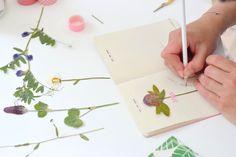 Herbarium DIY