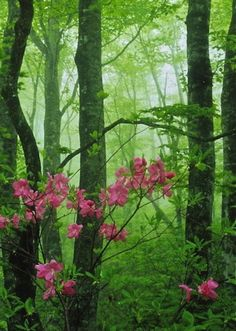 forest flower gardens | Forest flowers