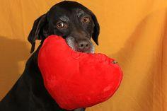 Spreading Love Dogs, Animals, Animales, Animaux, Pet Dogs, Doggies, Animal, Animais