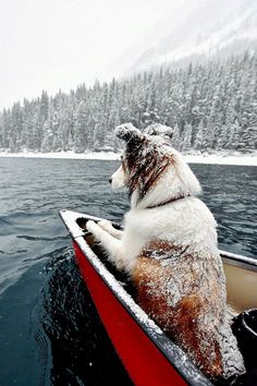 Goodest chilled doggo on an adventure  - Album on Imgur