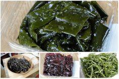 10 Principais Tipos de Algas Marinhas Comestíveis | Biosom