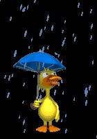 Duck in the rain. ... gif animation
