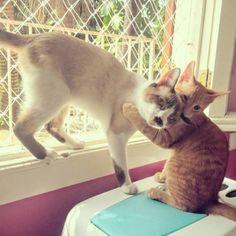 adorable ginger kitten hugging a cat