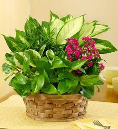 Indoor House Plants Varieties
