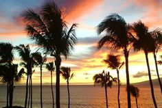 Best Maui Vacation Tips!
