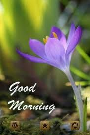Free Good Morning Images, Latest Good Morning, Good Morning Photos, Good Morning Gif, Good Morning Greetings, Morning Pictures, Good Morning Wishes, Morning Messages, Good Night Quotes