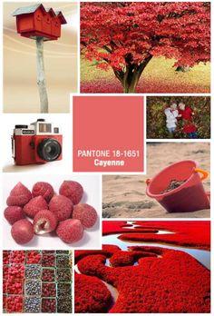Cayenne Inspiration Board by Kirstyn Krausz #pantone