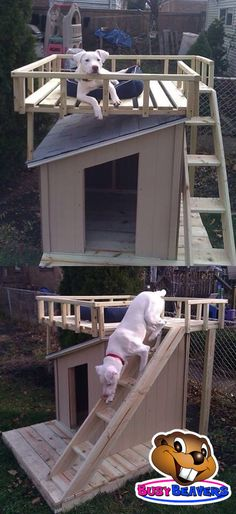 Dog House? Dog Castle!