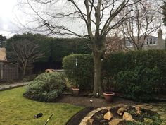 If You're Looking For A Tree Surgeon In The Portlethen Area, Then Please, Call Apollo Tree Services For Portlethen Today