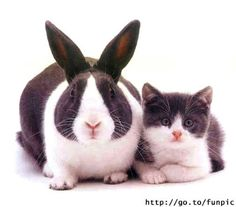 BUNNY & KITTY TWINNIES!