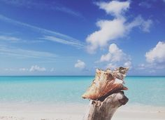 It's a perfect day in Turks and Caicos. Photo courtesy of conchalibre on Instagram.