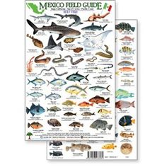 Fishes in baja california mexico scuba travel scuba dreams mexico field guide baja sea of cortez reef fish rainforest publications sciox Choice Image