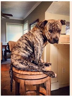 A whole lot of lovin' - amazing brindle color!
