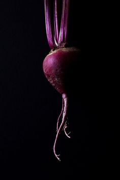 Whitney Ott Photography - Food / Abstract