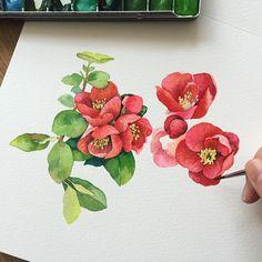 예뻐서 찍어왔는데... 동백꽃 비슷하게 생겼지만 아닌 것 같고 작고 더 귀여움...ing🌺 . . #꽃#꽃스타그램#꽃그림#그림#그리기#수채화#빨강#초록#식물#아트북#드로잉#일러스트#셀스타그램#셀피#리그림스타그램… Watercolor Portrait Painting, Wreath Watercolor, Watercolor Cards, Watercolor Flowers, Botanical Flowers, Botanical Art, Plant Painting, Water Art, Plant Illustration