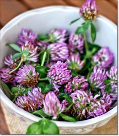 Detox Kur, Edible Wild Plants, In Natura, Detox Tips, Love Natural, Edible Flowers, Medicinal Herbs, Salvia, Vegetable Garden
