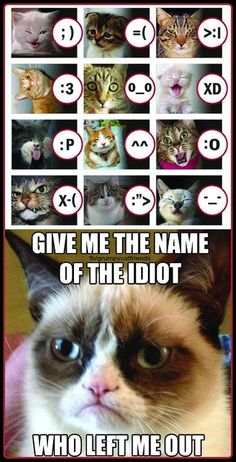 See, they're not ALL Grumpy! - Bottled by Grumpy Cat Grumpy Cat Quotes, Funny Grumpy Cat Memes, Cat Jokes, Cute Funny Dogs, Cute Funny Animals, Cute Cats, Funny Cats, Funny Animal Jokes, Funny Animal Pictures
