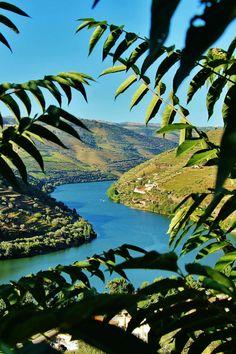 Pinhão, Douro, Portugal Douro Portugal, Porto City, Us Travel, Rio, Spain, Landscape, Water, Places, Flora