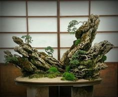 It's considered the ancestor of both bonsai and suiseki (viewing stones). Description from pinterest.com. I searched for this on bing.com/images