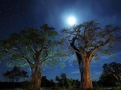 Silueta de árboles bajo el cielo nocturno Fotografía de Tom Schwabel