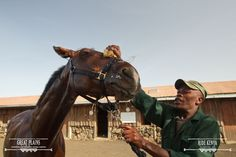 The horses getting prime attention to make sure they are in tip top form for your safaris | Ride Kenya Safaris
