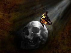 Skull and Monarch Satanic Ritual Abuse, Negative People, Monarch Butterfly, Mindfulness, Skulls, Illuminati, Studying, Cosmic, Butterflies