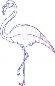 how to draw a greater flamingo step 4