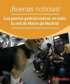 ¡Buenas #noticias! Los #perros podrán entrar en toda la #red de #Metro de #Madrid  La #primera vez que #viajé a Estados Unidos, fui a un #estado en el que los perros #viajaban en #metro y bus y podían entrar en las tiendas a comprar con sus #dueños como si fueran un #acompañante más.
