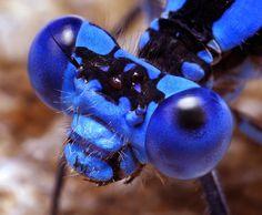 Nature: Insects Eeeeeeekkkkkkk!!!!