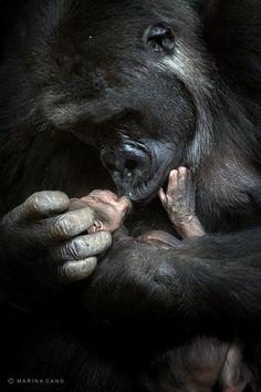 Animal Love Photography by Marina Cano | Cuded