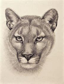 Pencil Drawings Of Animals, Animal Sketches, Art Sketches, Realistic Drawings Of Animals, Drawing Animals, Graphite Drawings, Cool Drawings, Lion Sketch, Cat Art Print