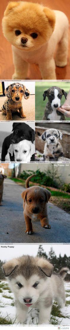 Puppies awwww