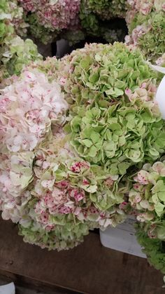 Antique Hydrangea | Hydrangea are thirsty - both as a plant and a cut flowers. Be sure to check moisture levels often. Submerging cut flower heads will prevent wilting and help them look better longer.